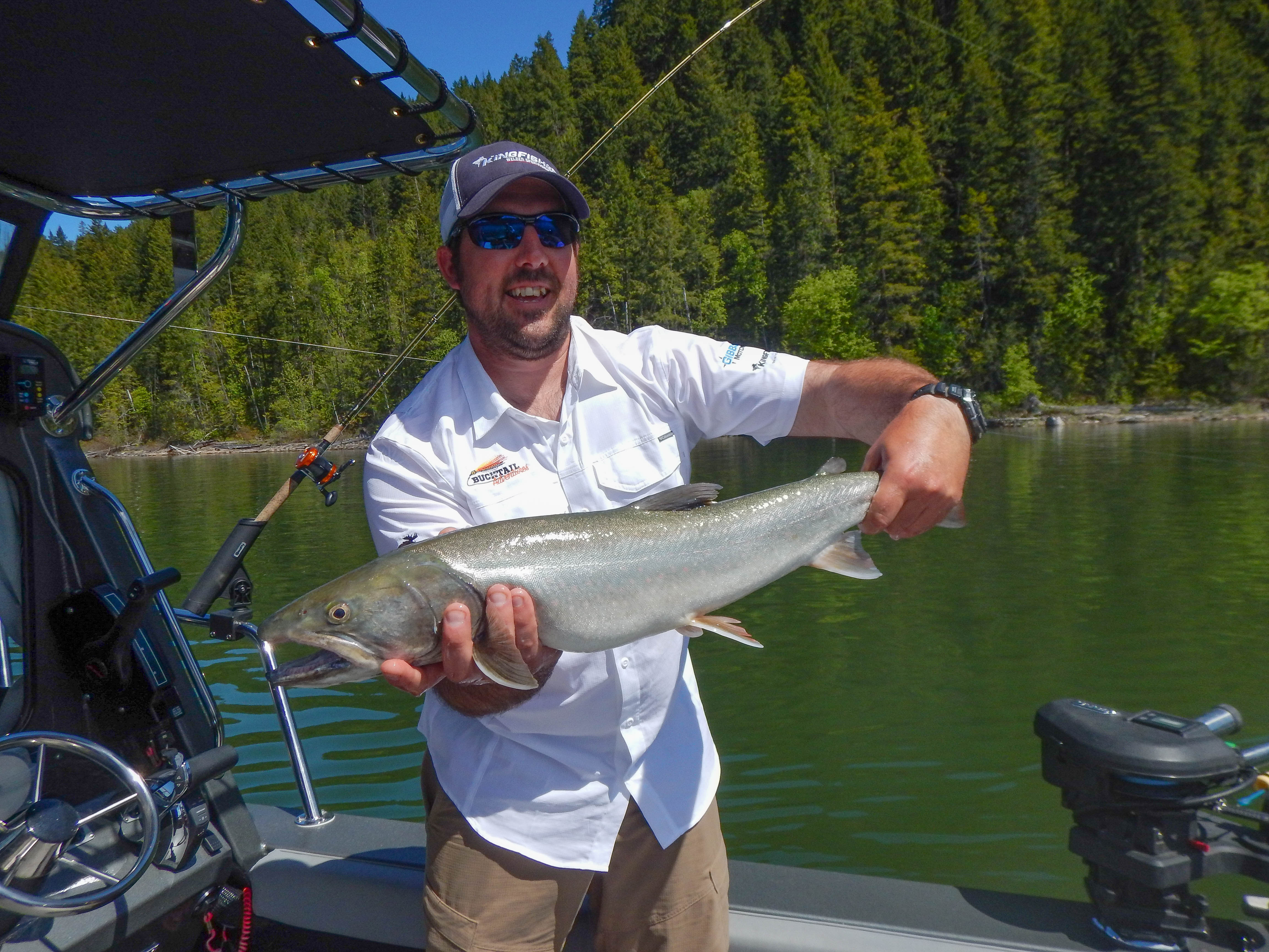 Spring Bull Trout