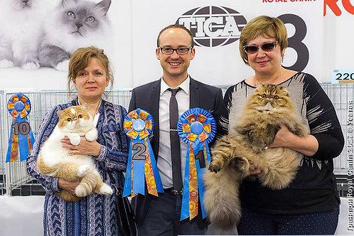 Registro de gatitos con Pedigree TDM 3 generaciones + Registro individual TICA