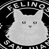 Felinos_sanjuan_edited.jpg