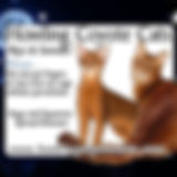 howlingcoyotecats.jpg