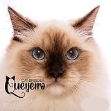 QUEIJEIRO.jpg