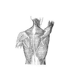 movement 3.jpg