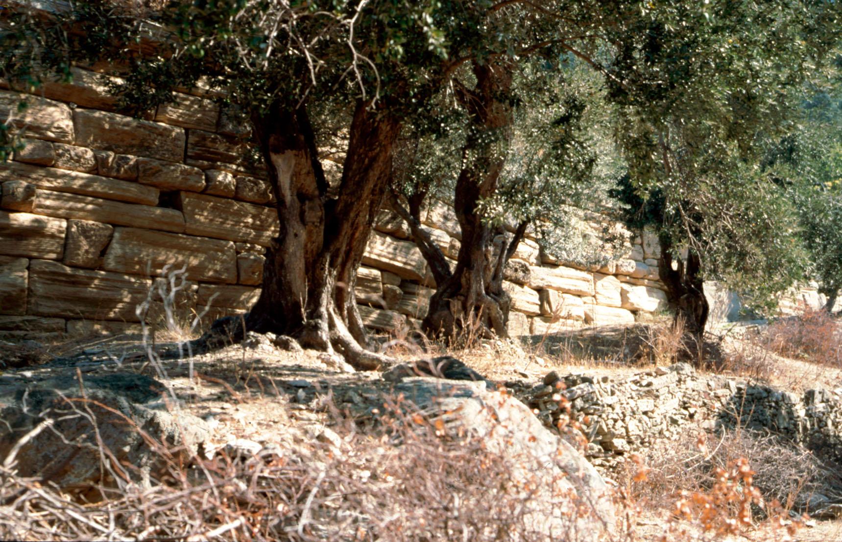 Άποψη του αναλημματικού τοίχου στην περιοχή του ιερού του Απόλλωνος Πυθίου (κτήμα Ψωμά)