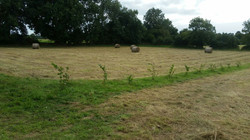 Hay in Middle Field
