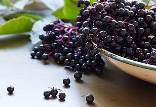 Elderberry-491243226.jpg