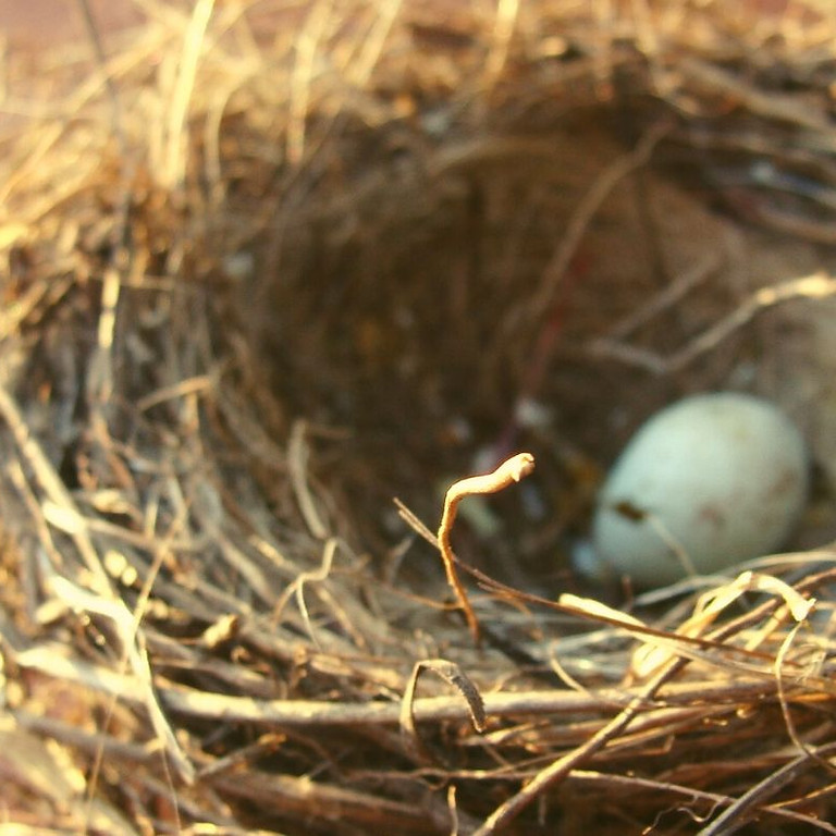 Chasse aux œufs en forêt à St-Piat Balade nature