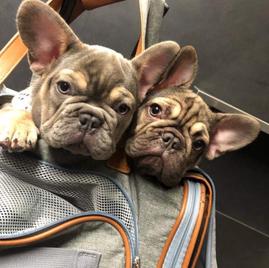 Maddox Puppies