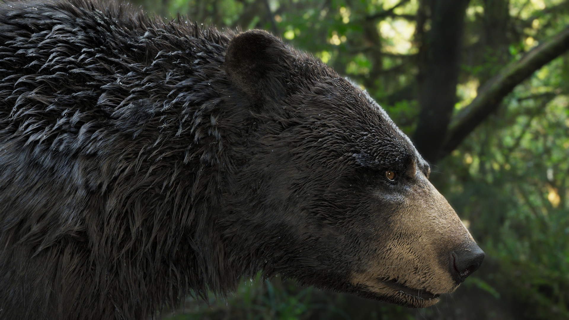 bear_1014.jpeg