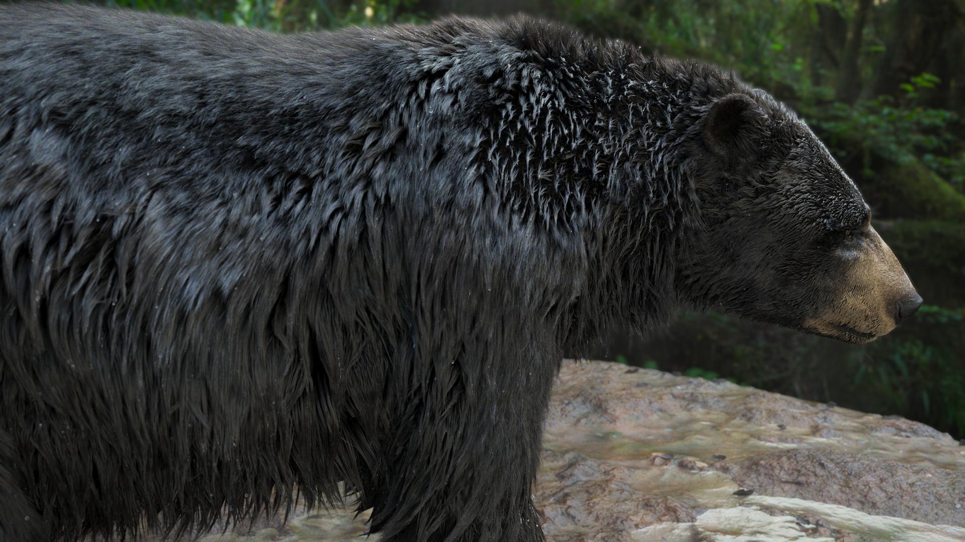 bear_1007.jpeg