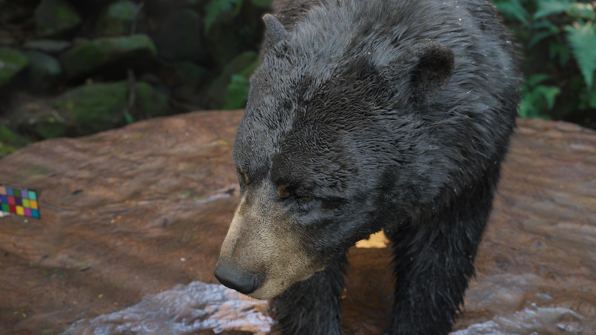 bear_1016.jpeg