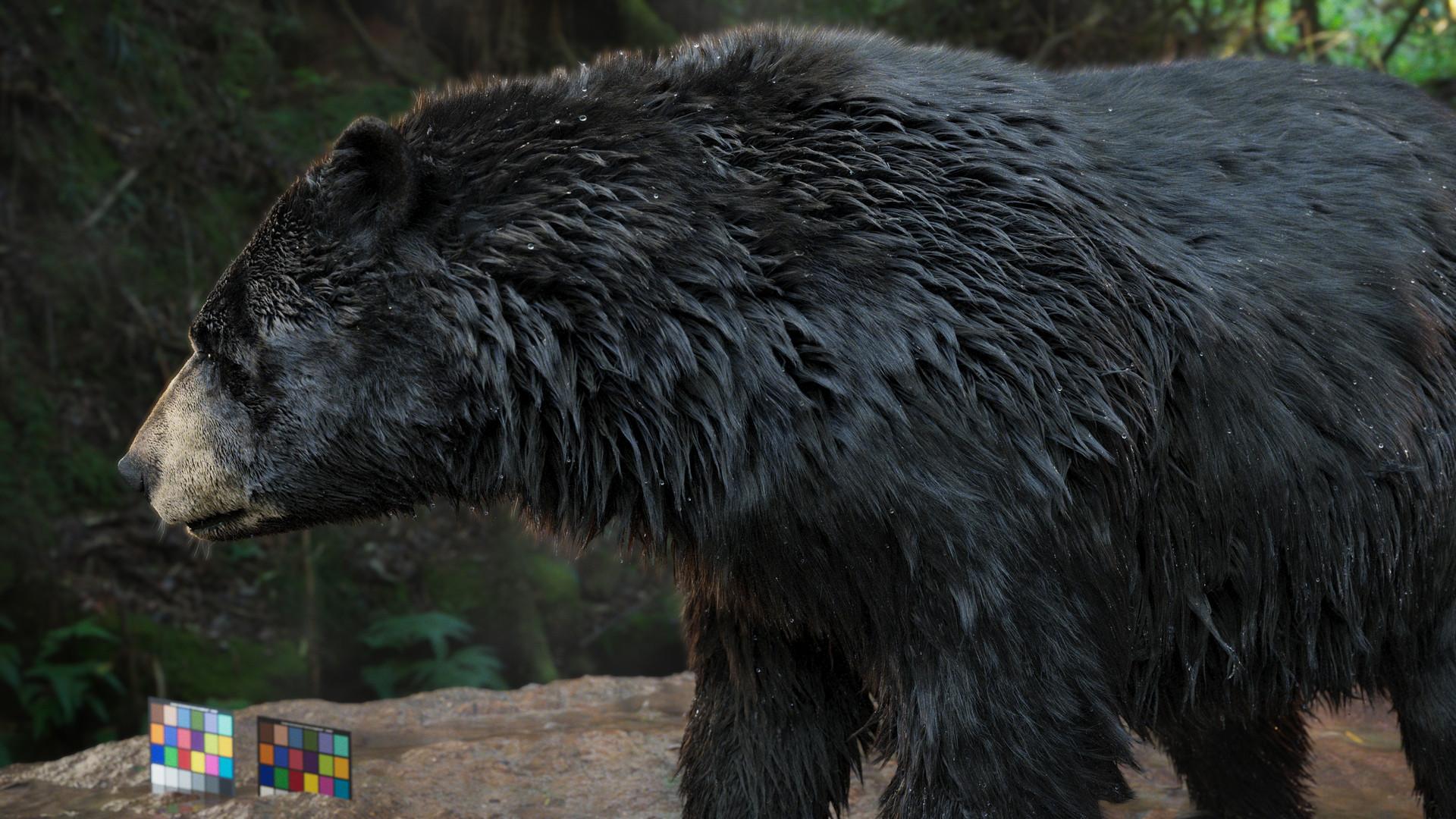 bear_1004.jpeg