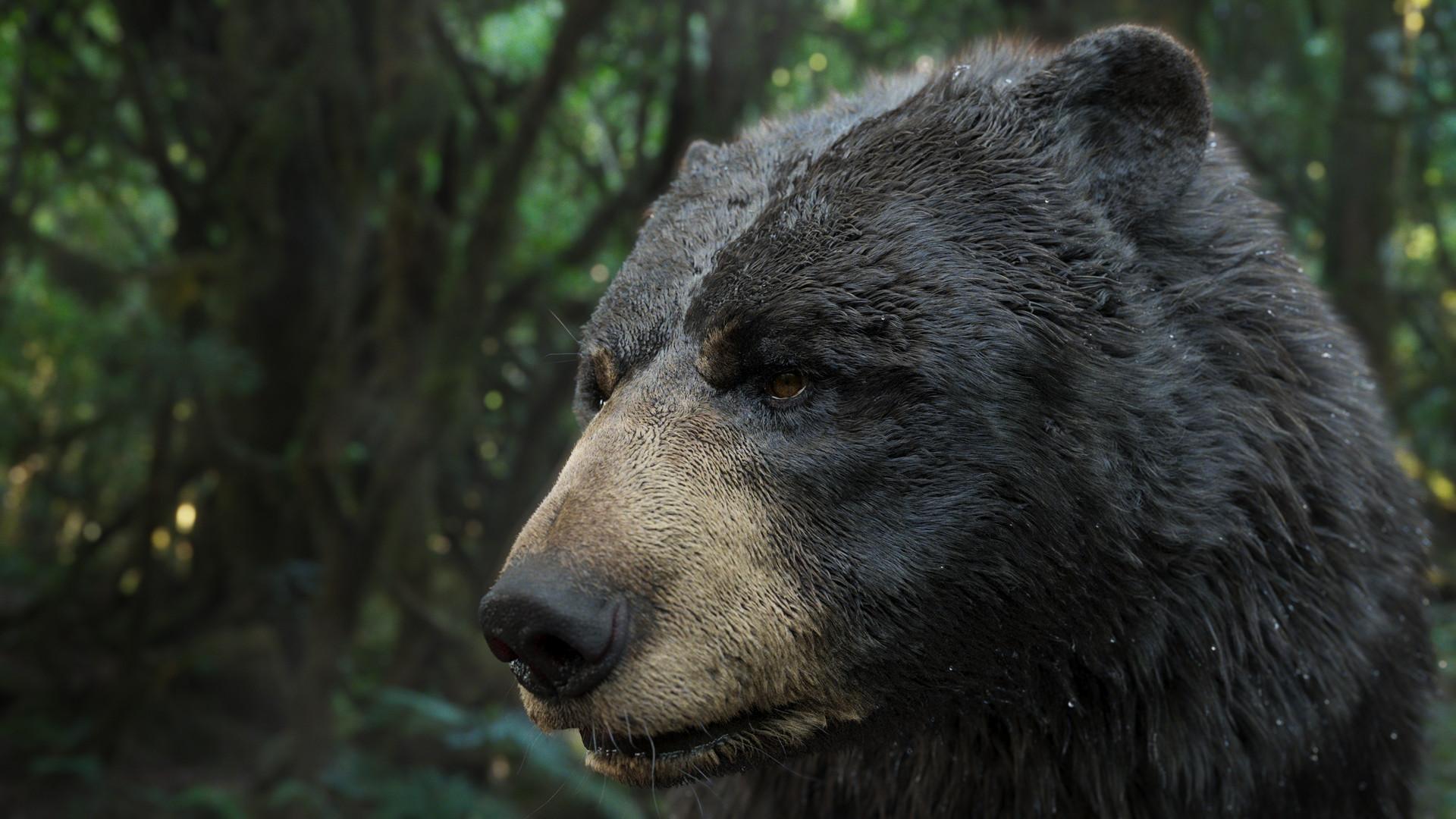 bear_1015.jpeg