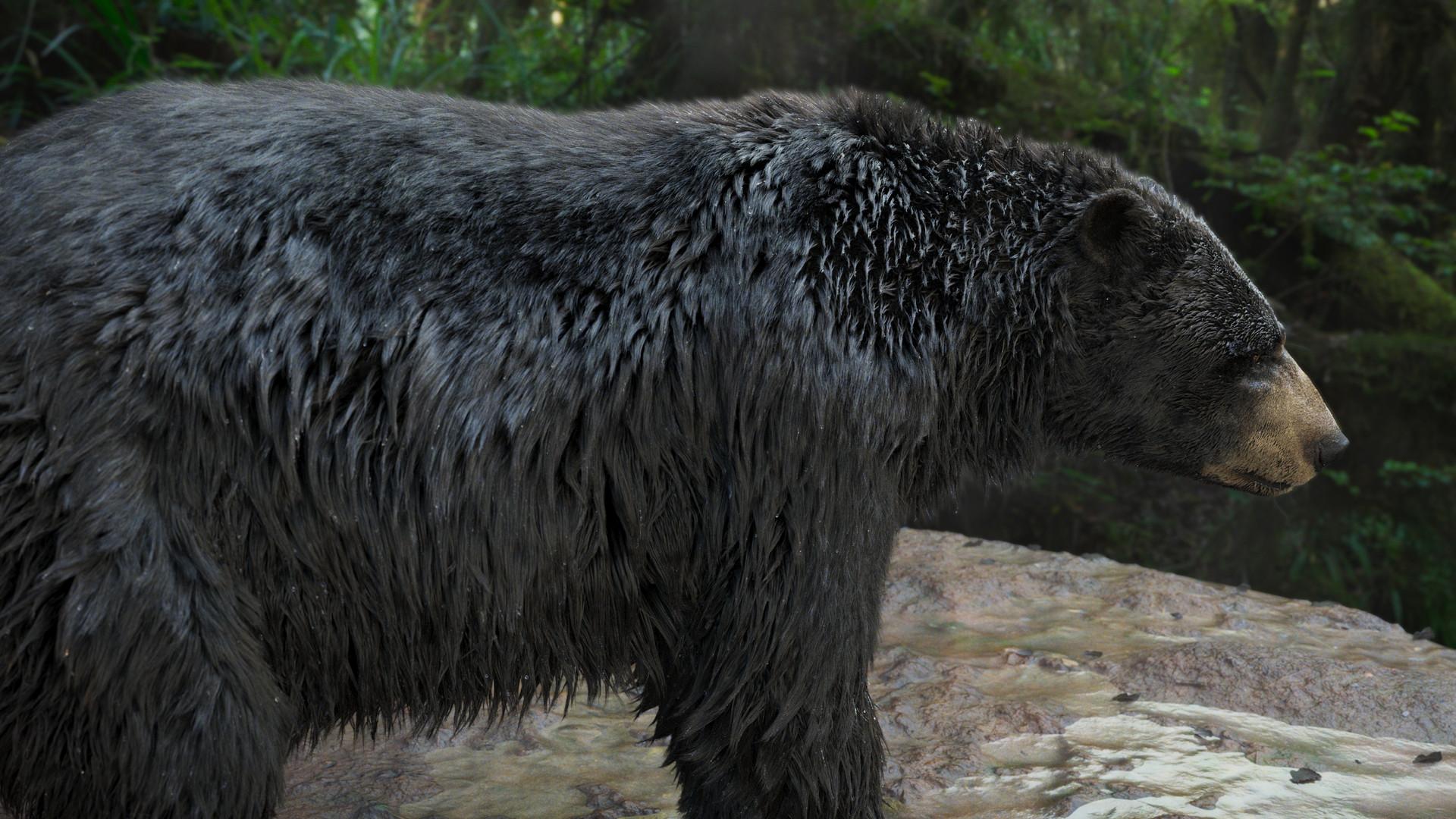 bear_1008.jpeg