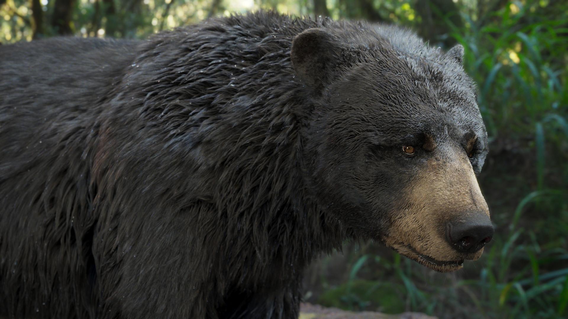 bear_1002.jpeg