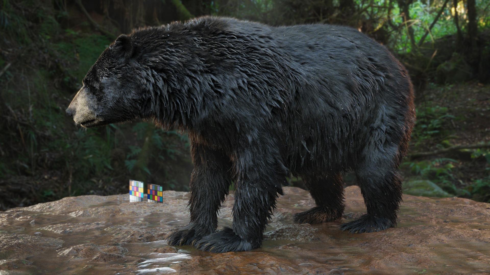 bear_1010.jpeg
