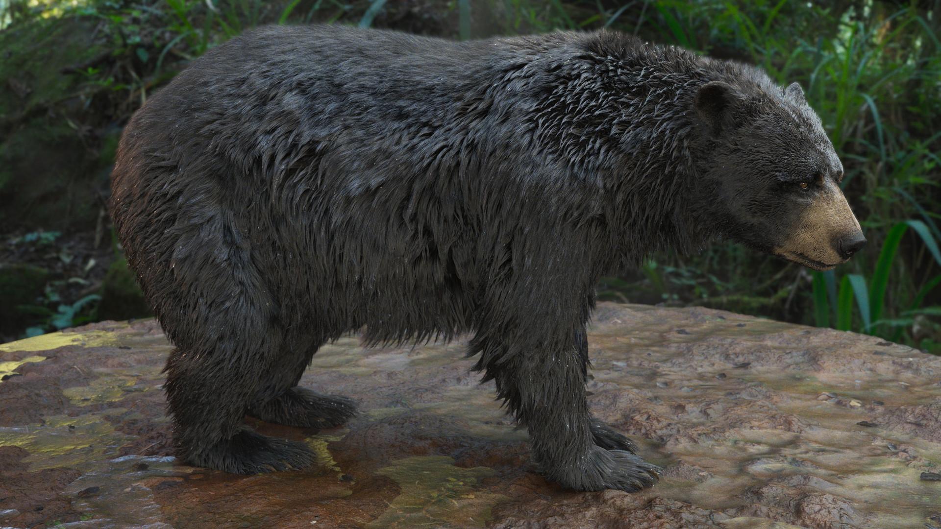 bear_1005.jpeg