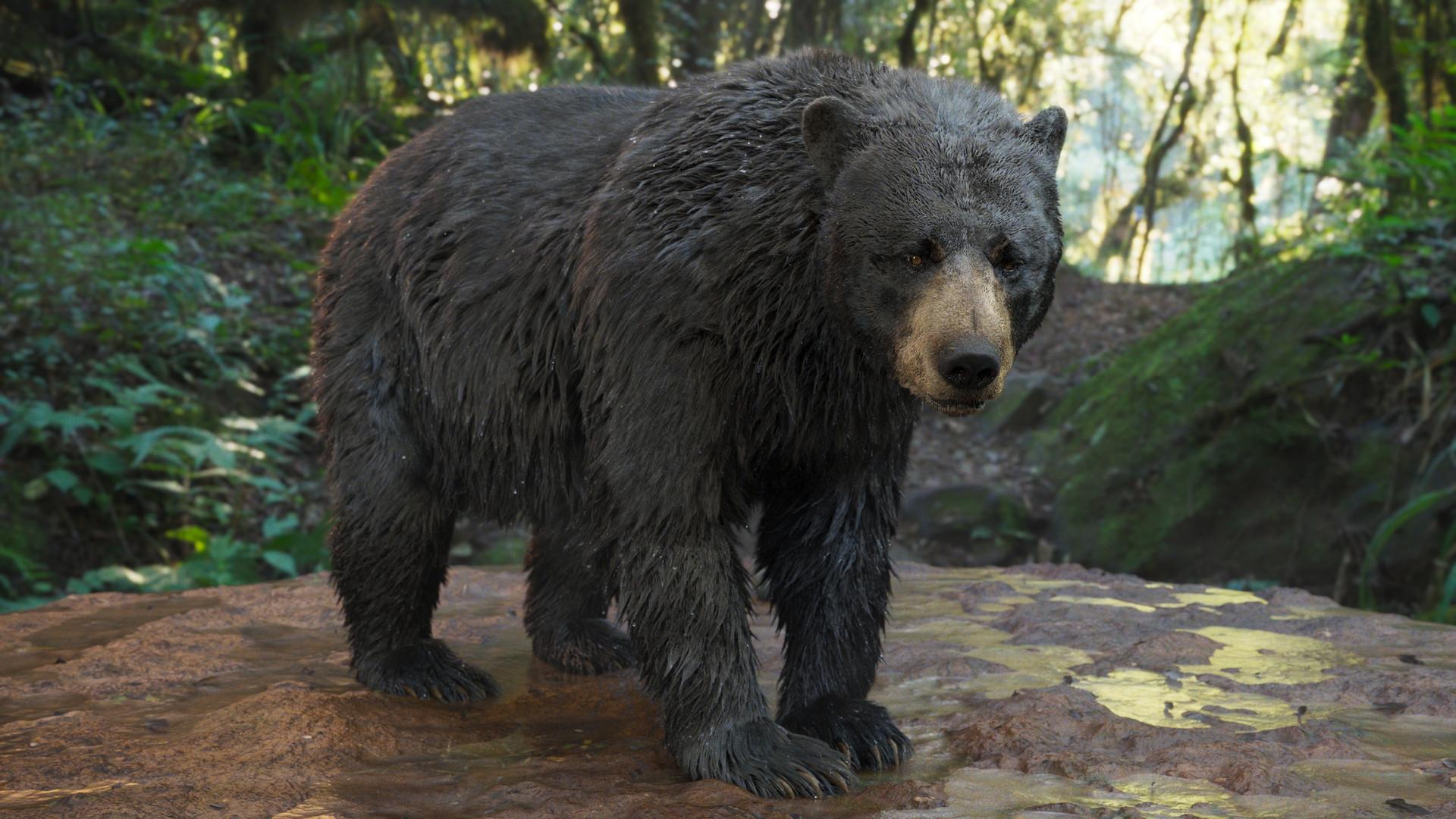 bear_1001.jpeg