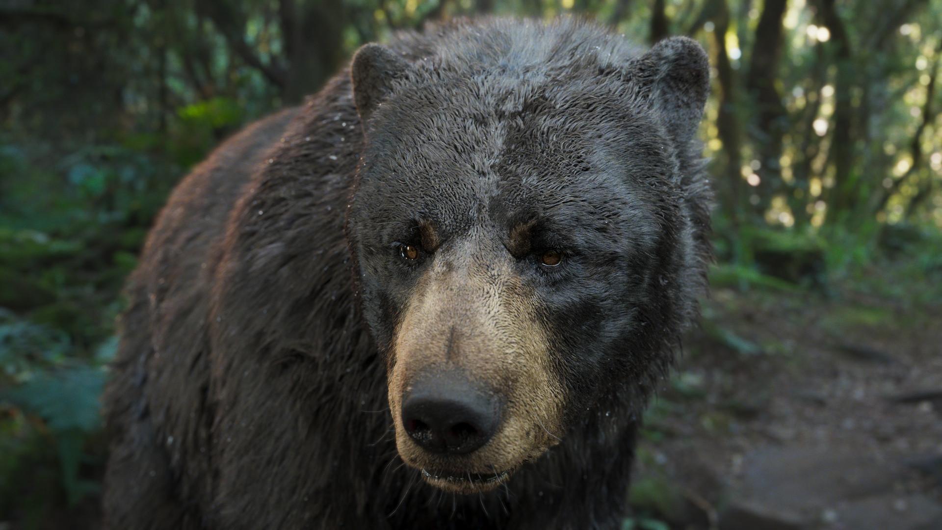bear_1003.jpeg