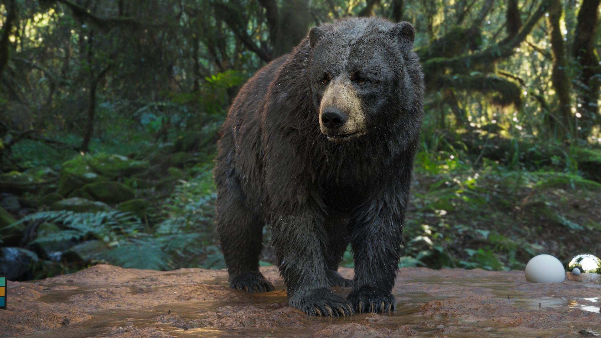 bear_1009.jpeg