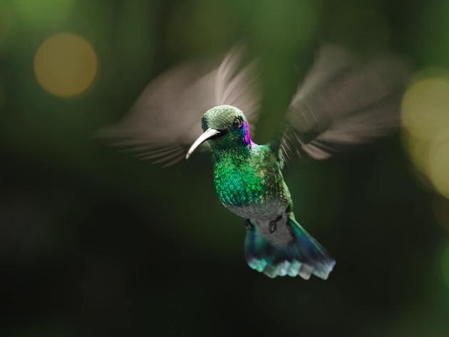 Purdey's 'Hummingbird'