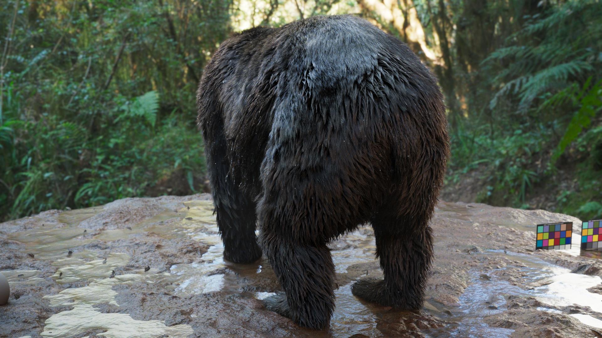 bear_1013.jpeg