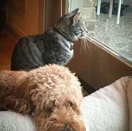 GIDGET AND STEVE ON A RAINY DAY