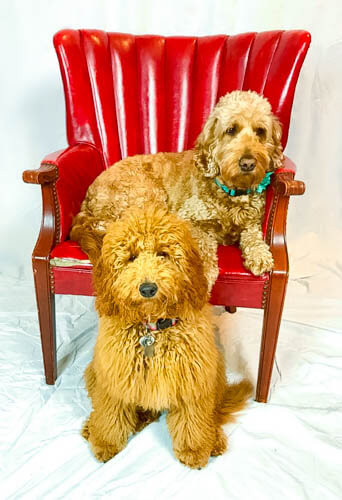 GIDGET AND LUNA WITH RED CHAIR