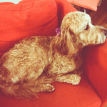 GIDGET IN RED CHAIR