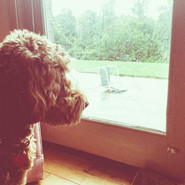 GIDGET LOOKING OUT WINDOW