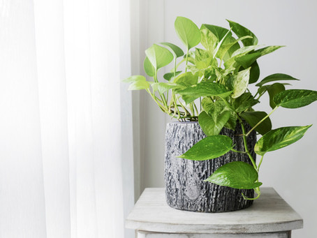 GROWING HOUSEPLANTS: a guide for beginners