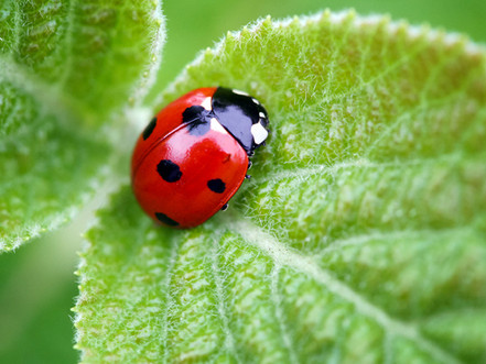 Beneficial Insects.