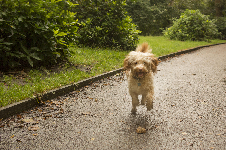 Dog Walker Heald Green
