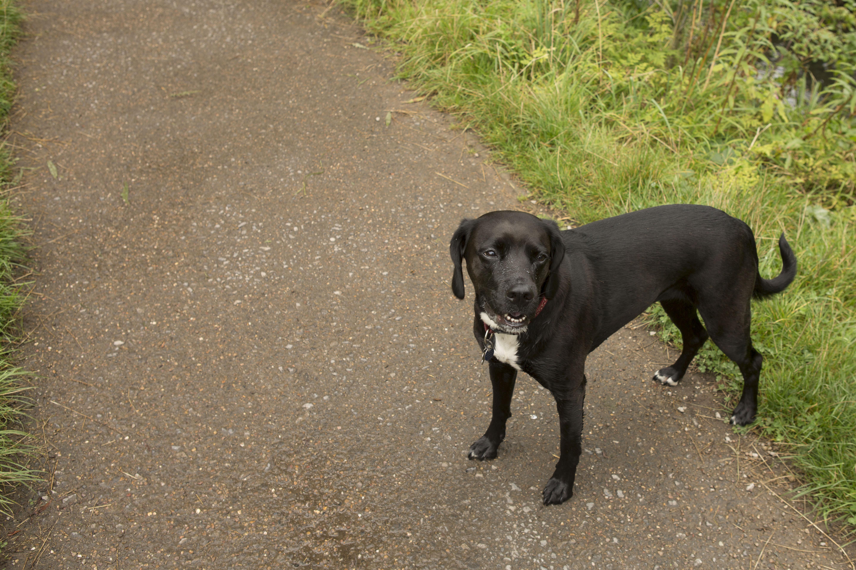 Dog Walker Bramhall