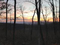 Beautiful hardwoods at sunset