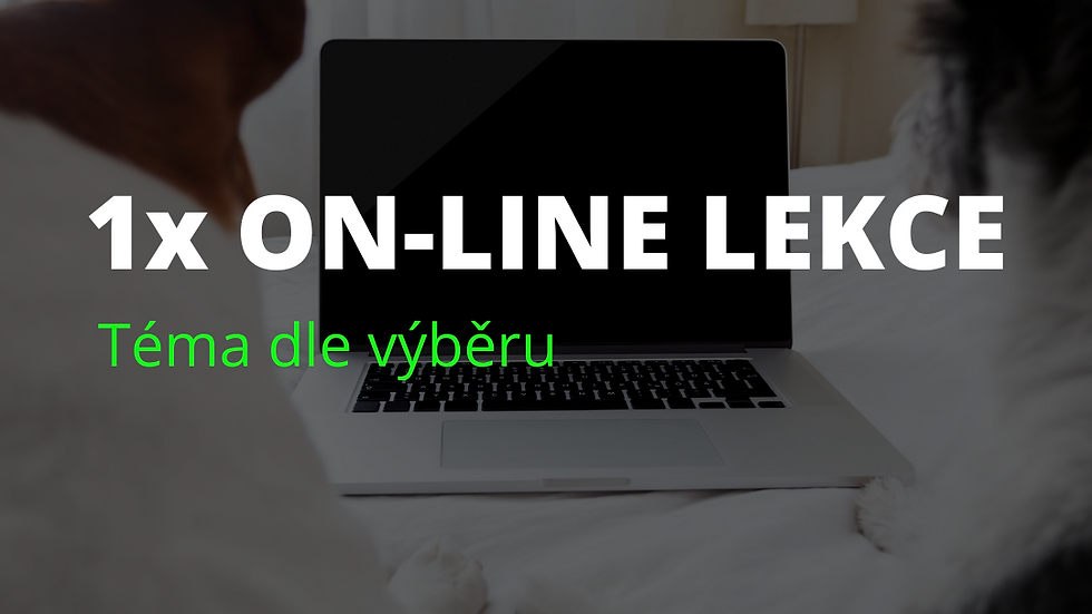 1x on-line lekce