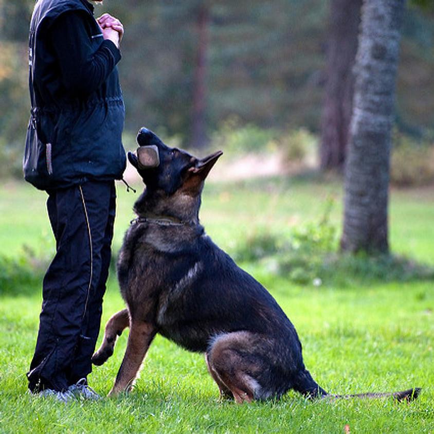 Výcvikový tábor a dovolená se psem