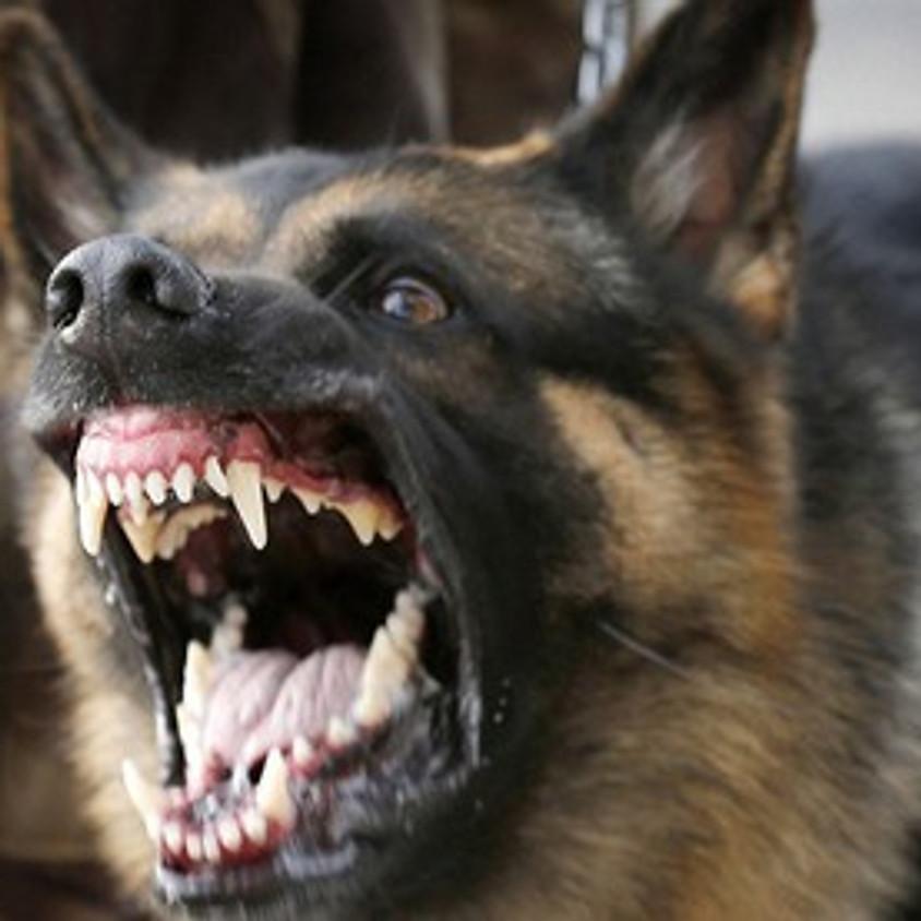 KURZ: Jak napravit agresivního psa (1)