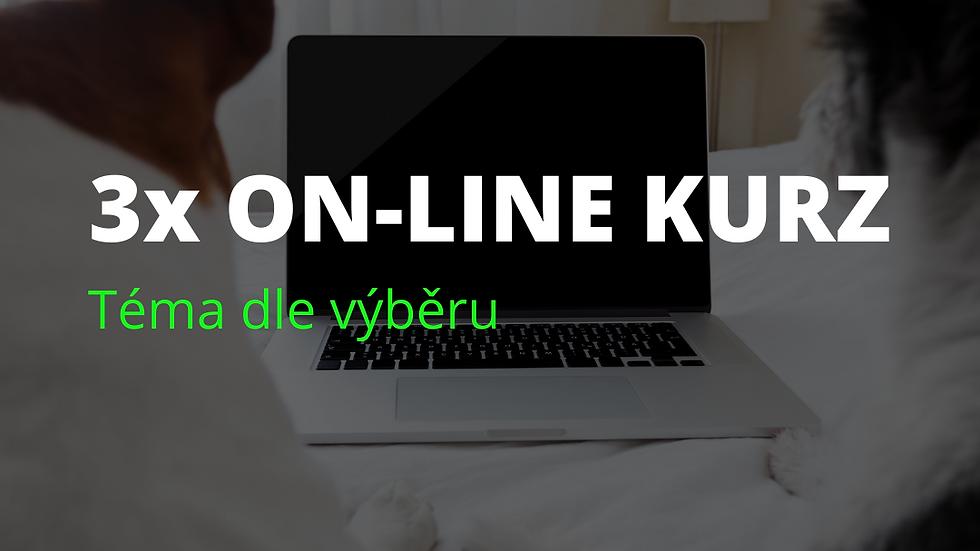 3x on-line kurz