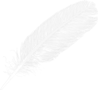 Large_White_Transparent_Feather_PNG_Clip