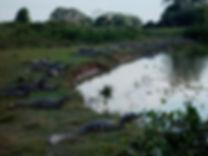 09-PCL-a-jacarés-2005-07-24.JPG
