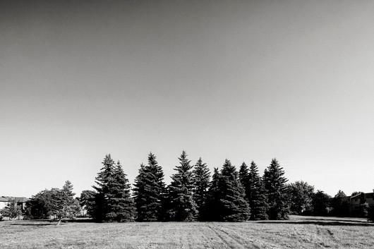 Trees in Field.jpg