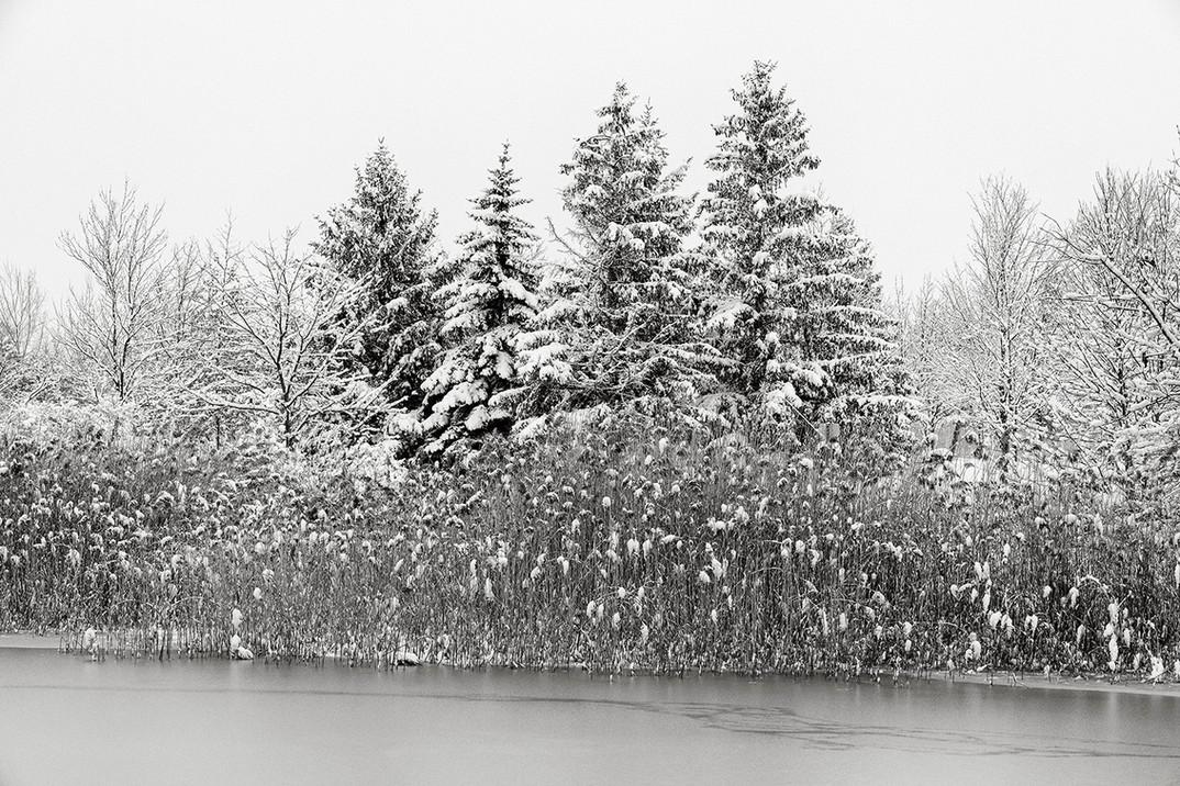 Winter Simplicity 2.jpg