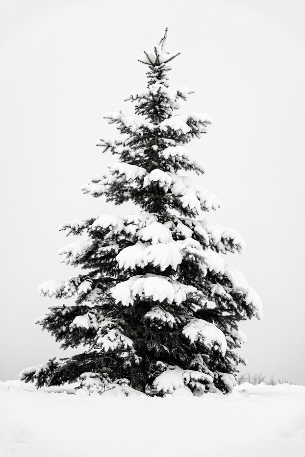 Winter Tree 3.jpg