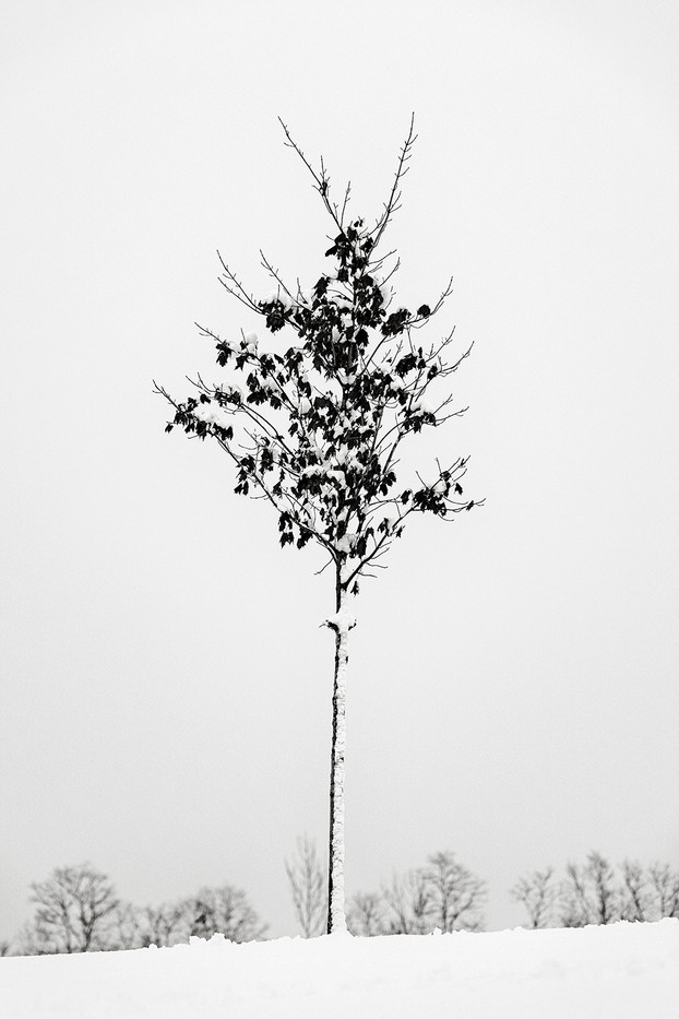 Winter Tree 2.jpg