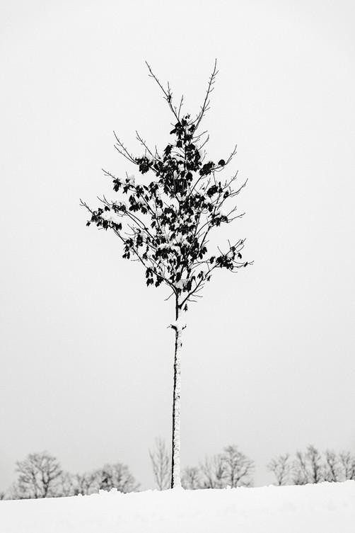 Winter Tree 2.jpg