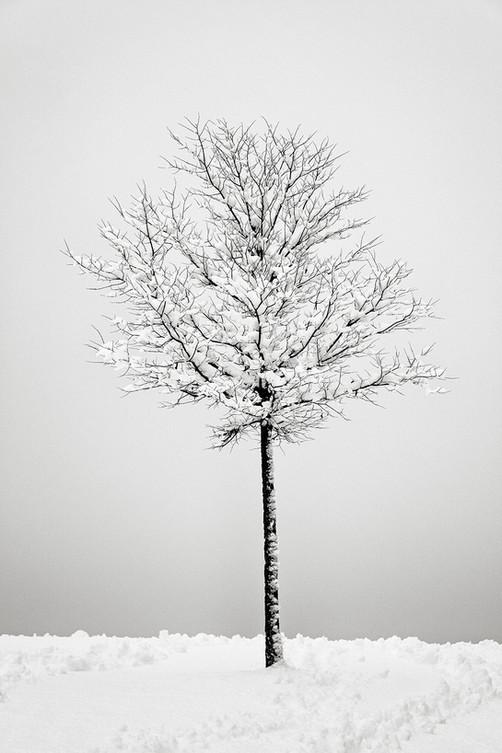 Winter Simplicity.jpg