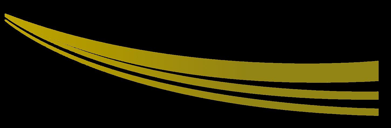 vector 4.png