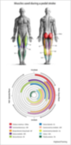 Power-Pedal-Muscles-BlogReadywidth500hei