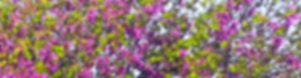 IMG_20200417_082111_edited_edited_edited