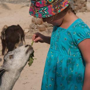 Пять органических мини-ферм на курортах Six Senses